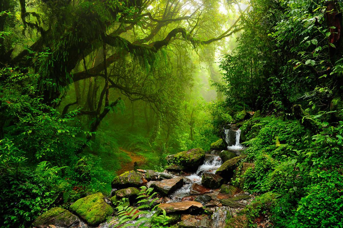 Subtropischer Dschungel