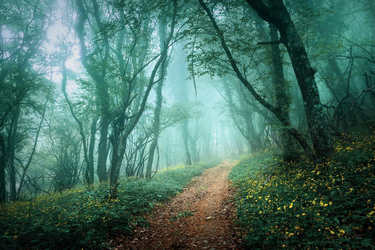 Nebelwald im Nebel