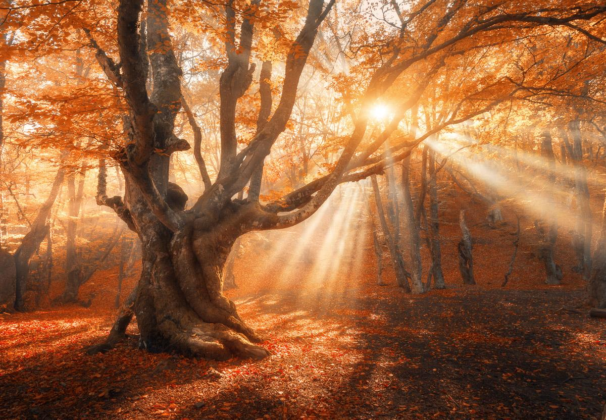Magischer alter Baum