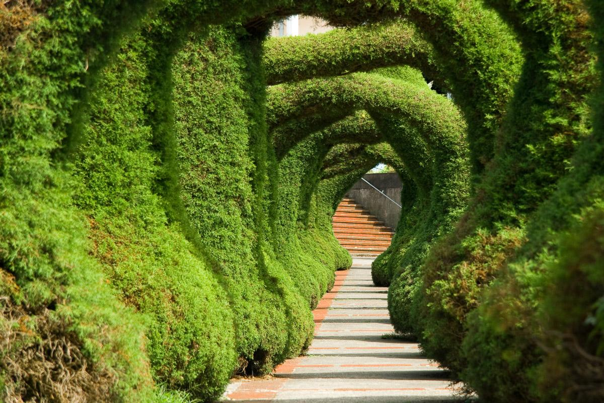 Wacholder-Skulpturengarten