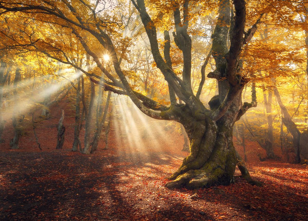Magischer alter Baum-Herbstwald