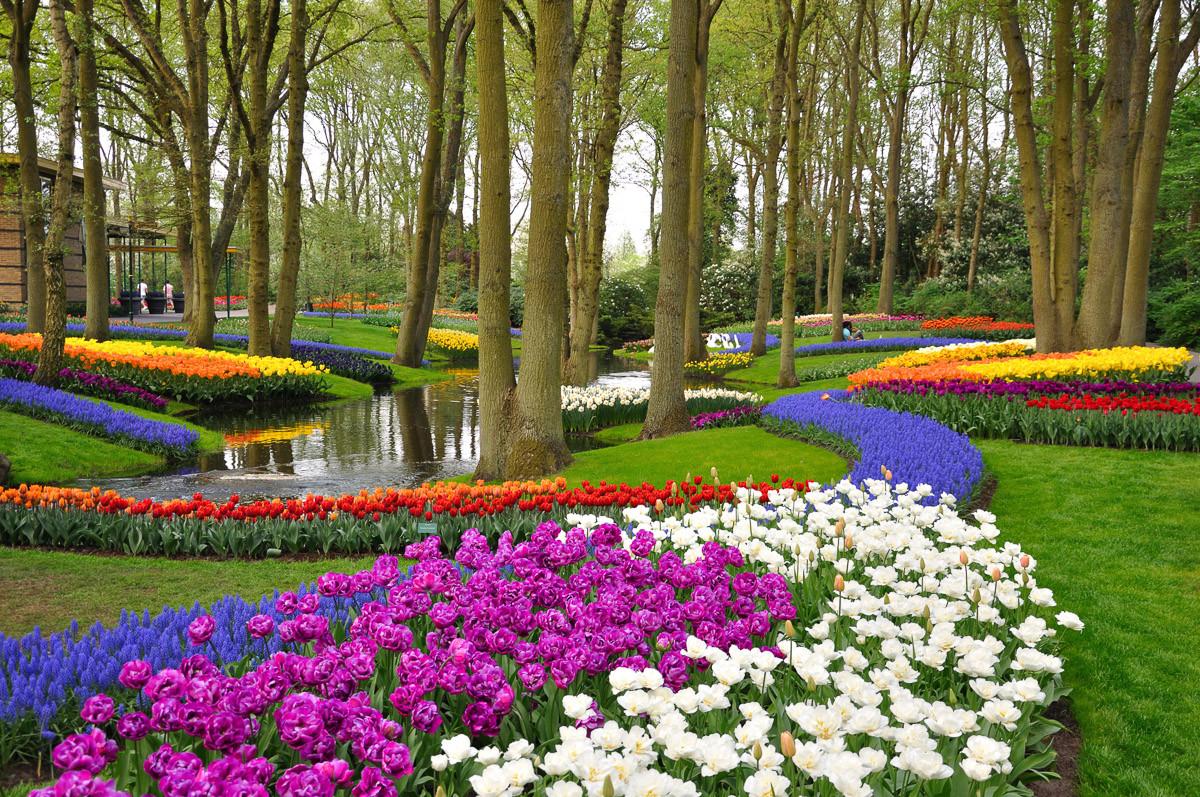 Tulpen im Keukenhof Park