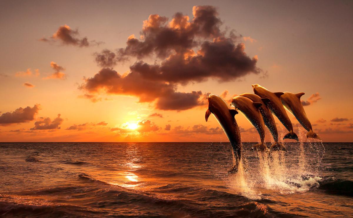 Sonnenuntergang springende Delfine