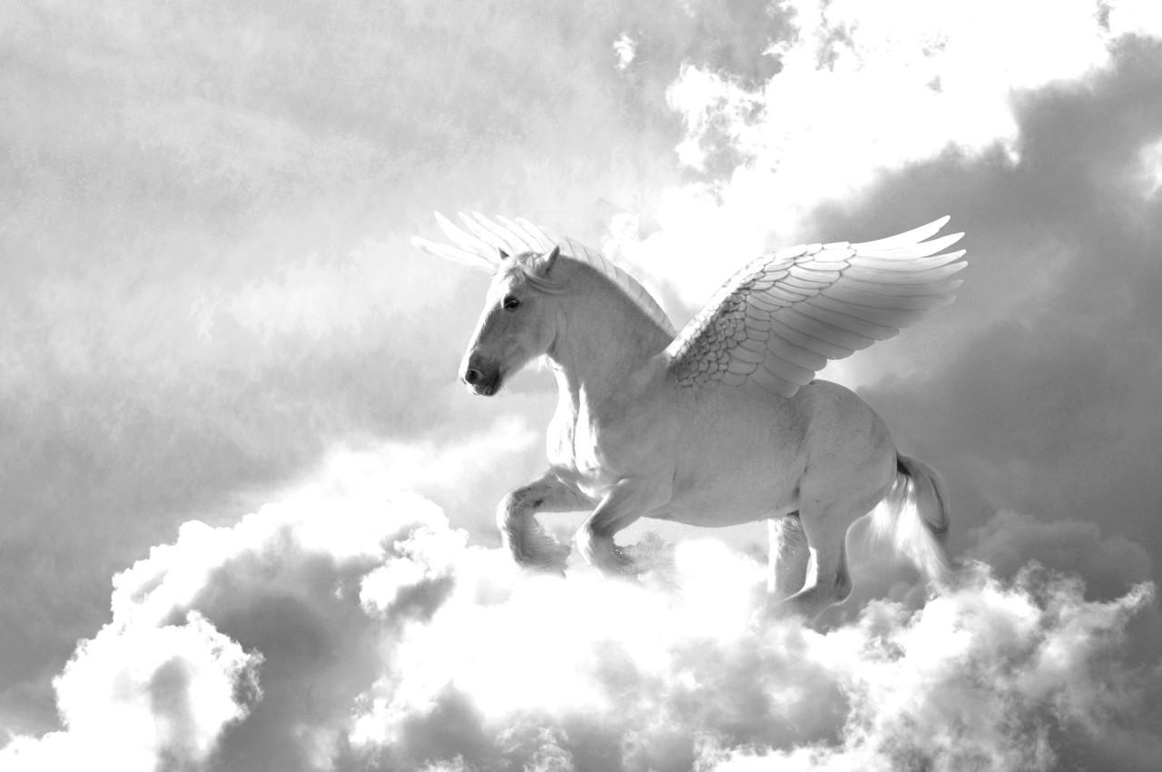 Pegasus Schwarz & Weiß