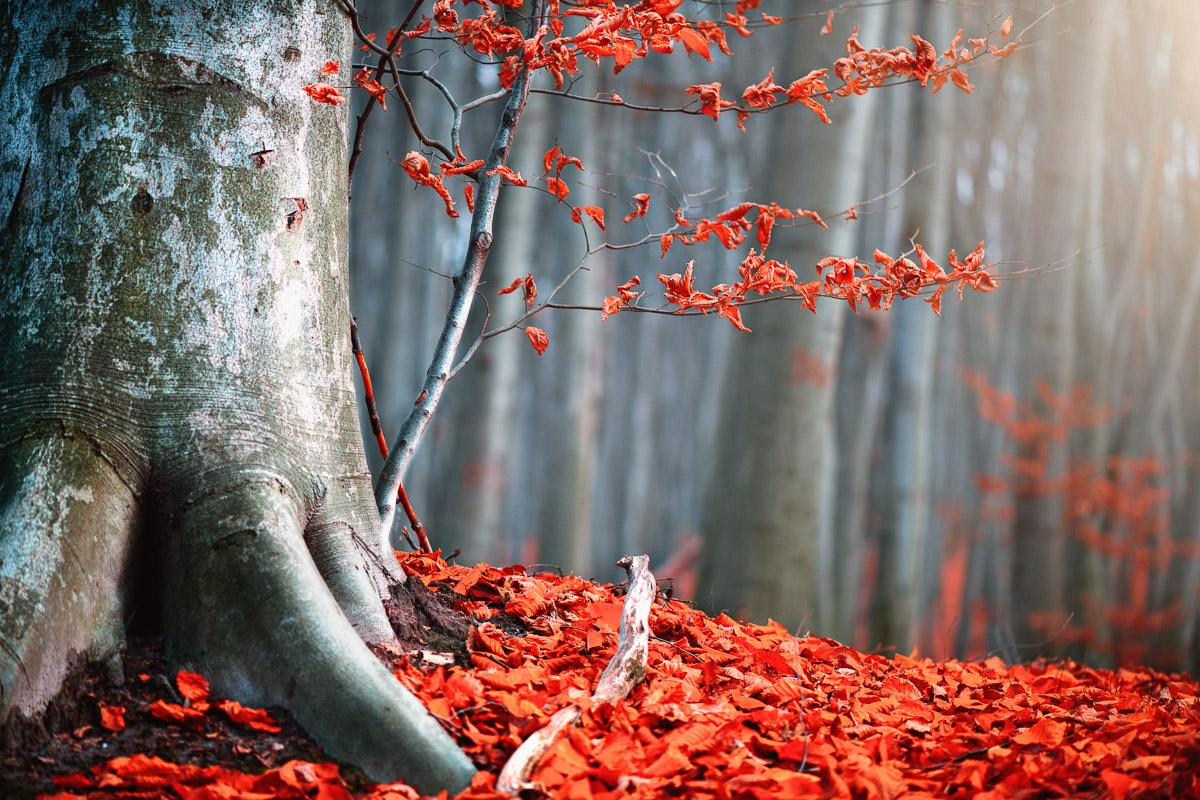 Alter Herbstbaum