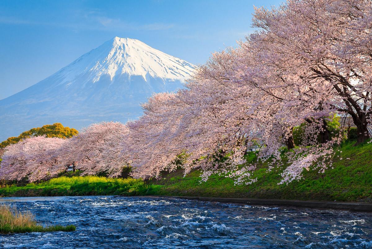 Fuji und Sakura