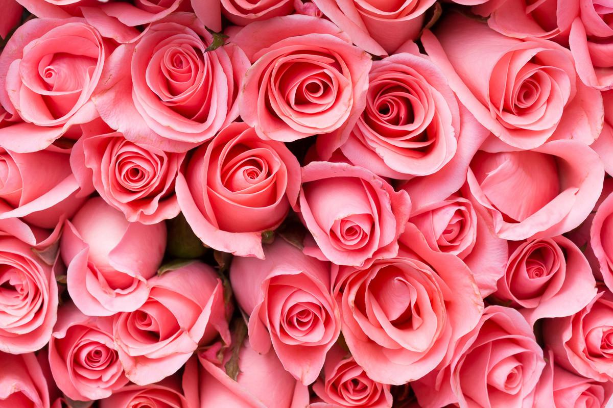Rosa Rosenblumen