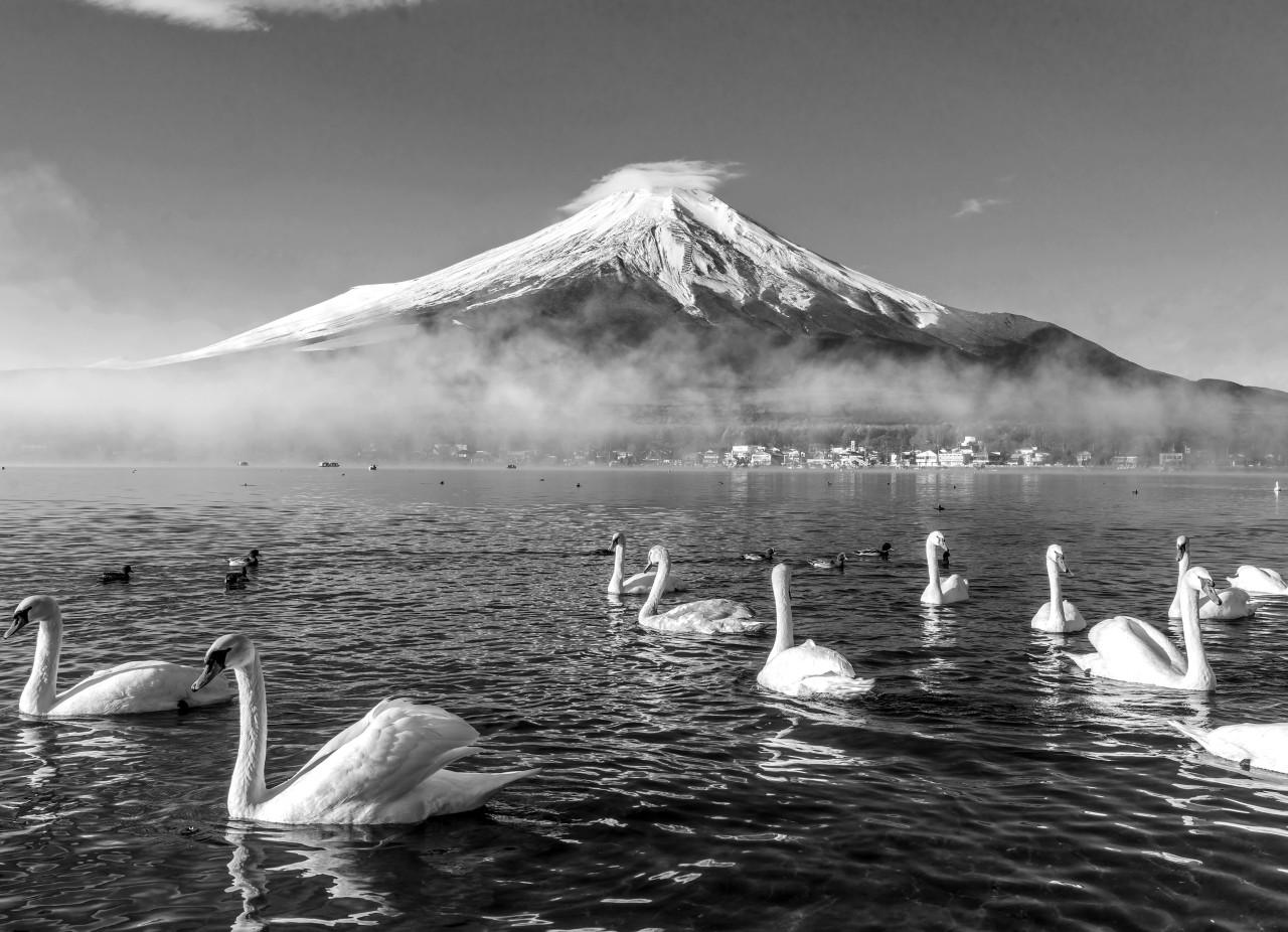 Mount Fuji mit Schwänen Schwarz & Weiß