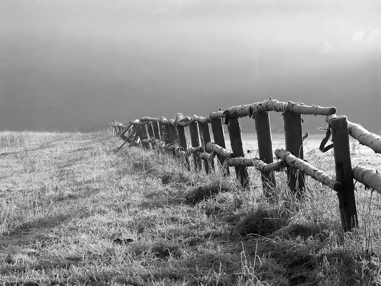 Feld Schwarz & Weiß