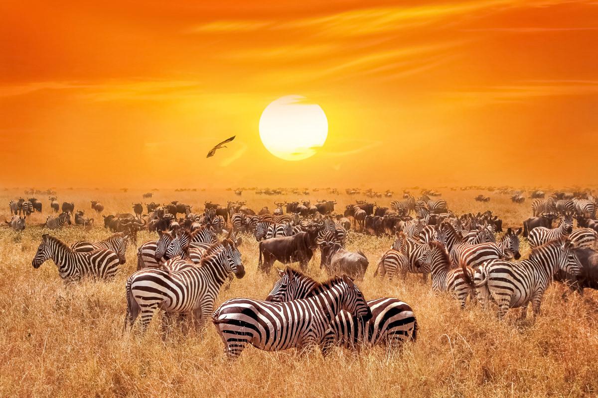 Afrikanische Antilopen und Zebras