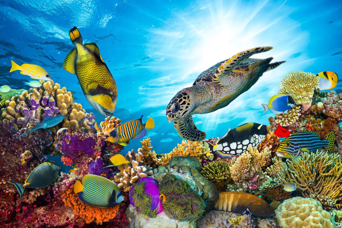 Korallenriff Fidschi