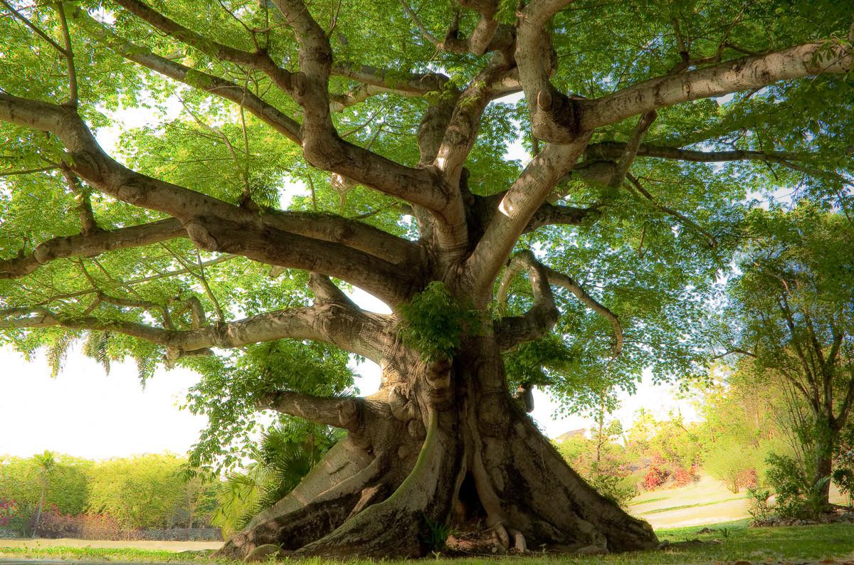 Friedlicher Baum