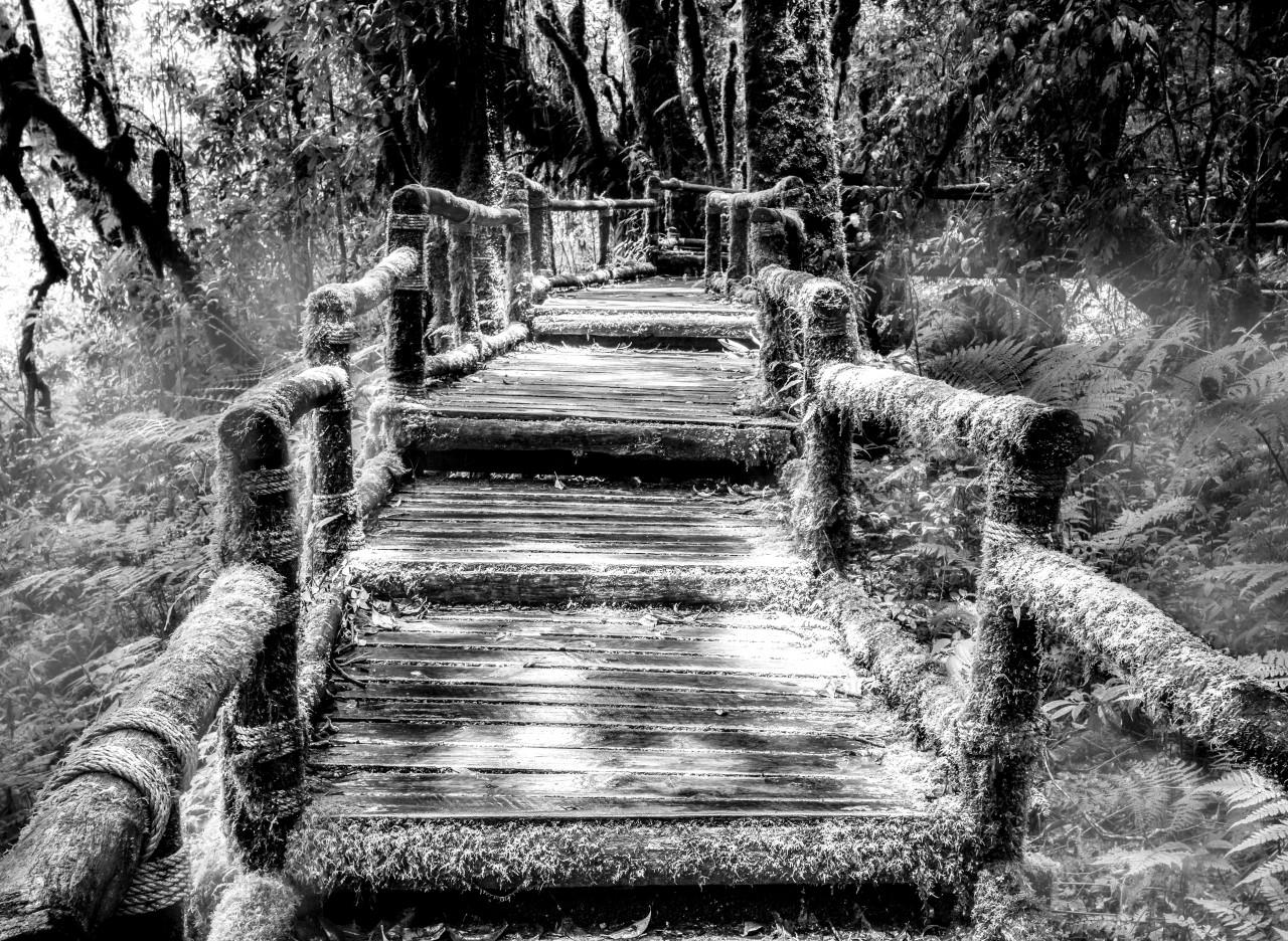 Waldbrücke Schwarz & Weiß