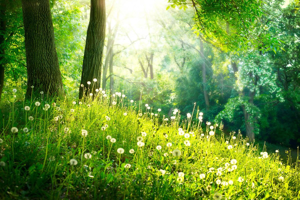 Grünes Gras und Bäume