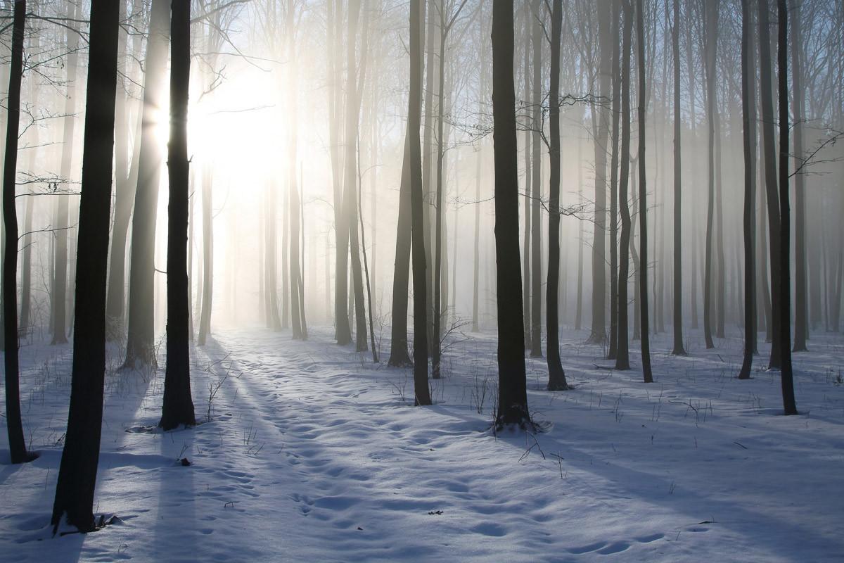 Nebeliger Winterwald
