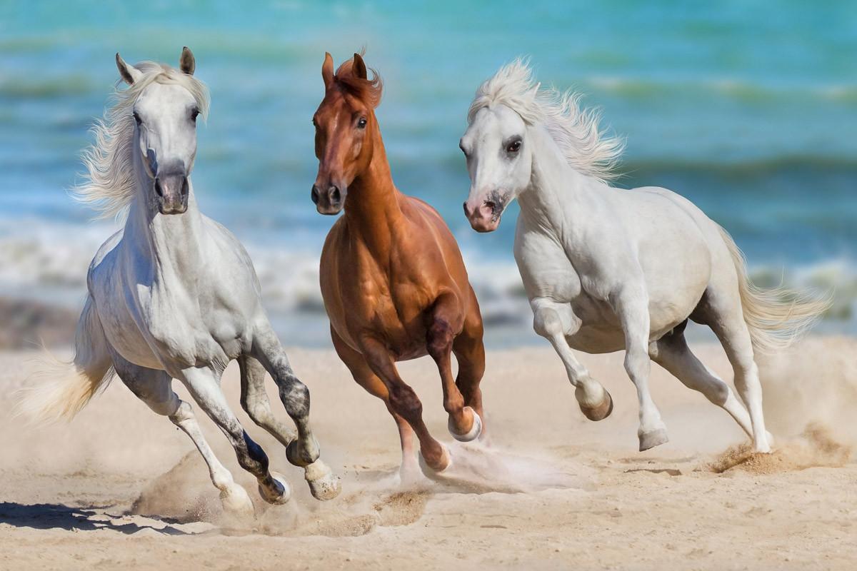 Horse Herd Run Galopp