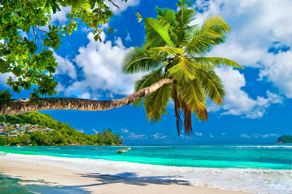 Seychellen Palm Beach