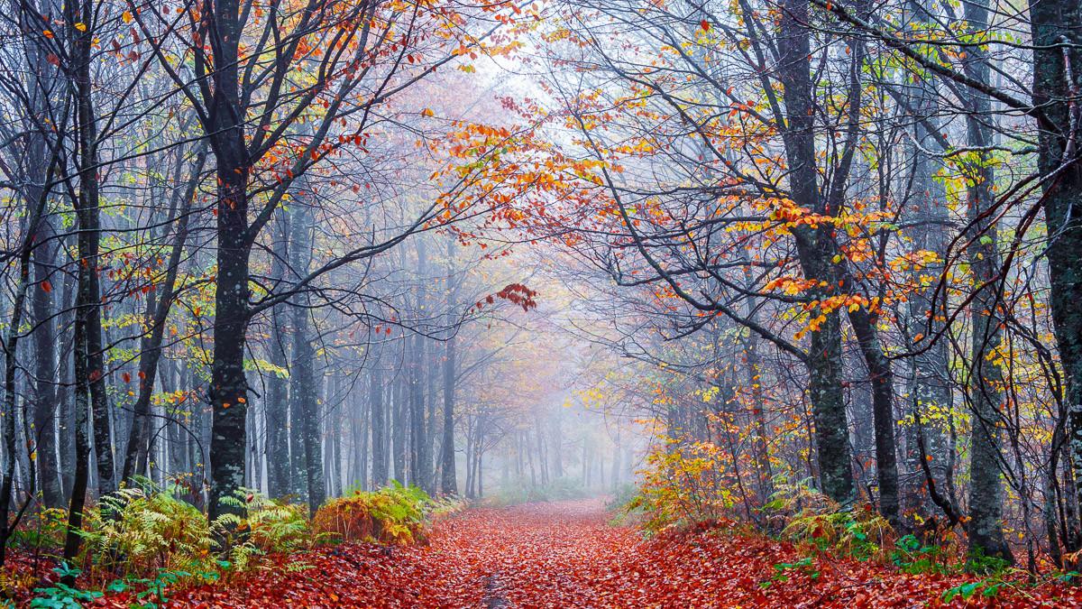 Neblige Herbstwaldstraße