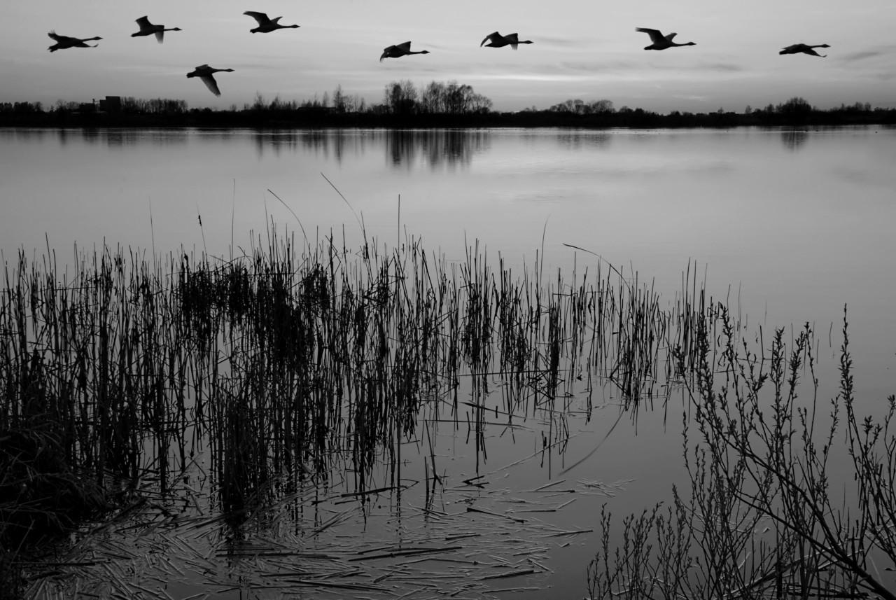 See Schwarz & Weiß