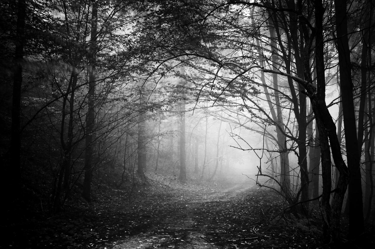 Waldweg Schwarz & Weiß