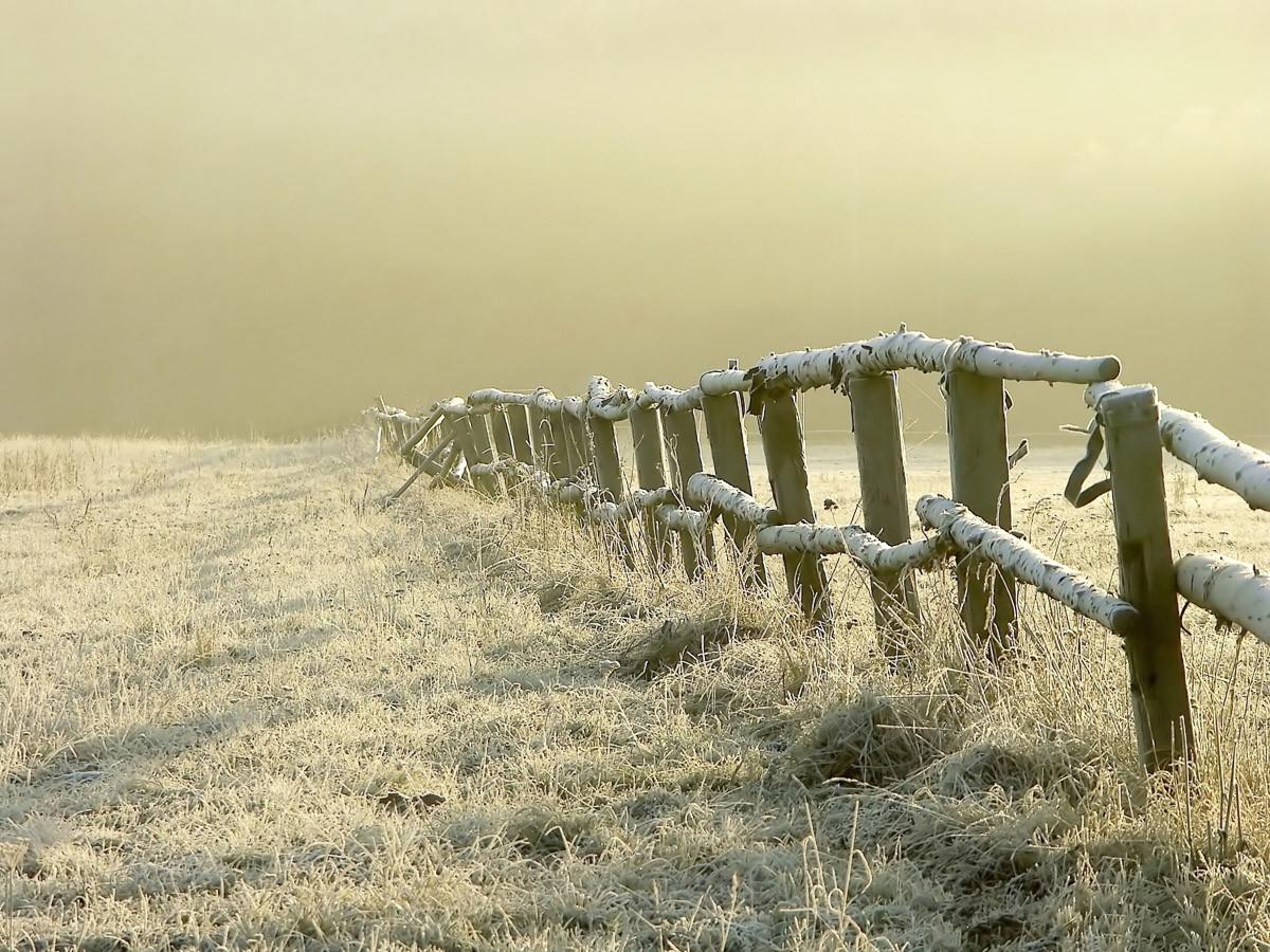 Zaun im nebligen Feld
