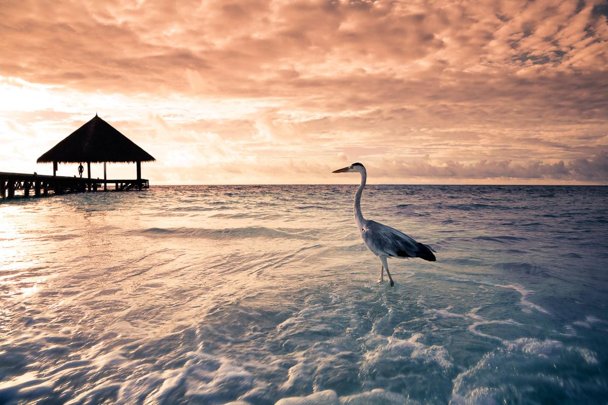 Flamingo Tropical Beach