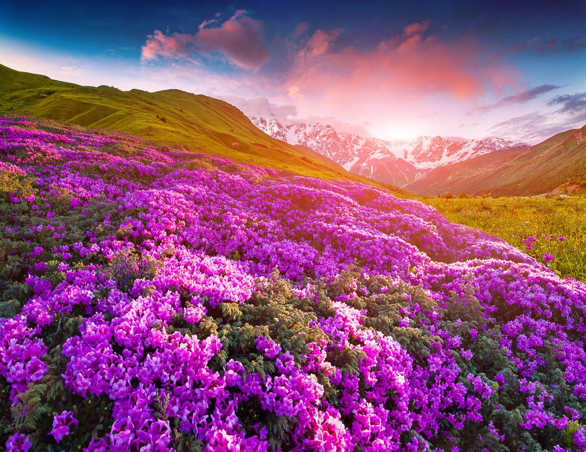 Berge Blumen