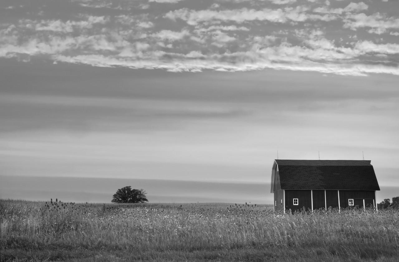 Farm Schwarz & Weiß