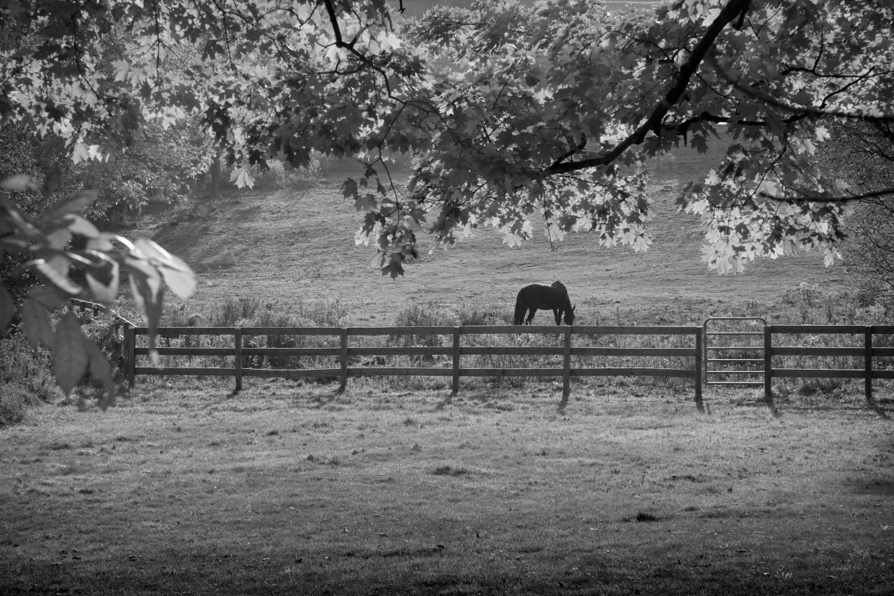 Pferdeweide Schwarz & Weiß