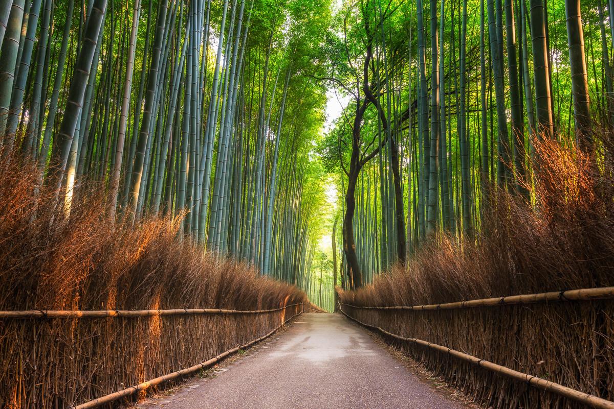 Bambushain von Kyoto