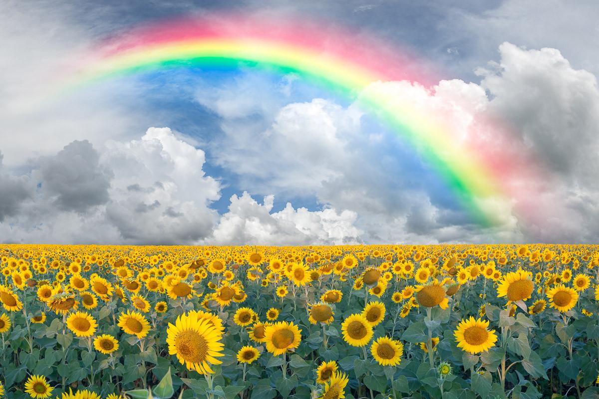 Regenbogen Sonnenblumen
