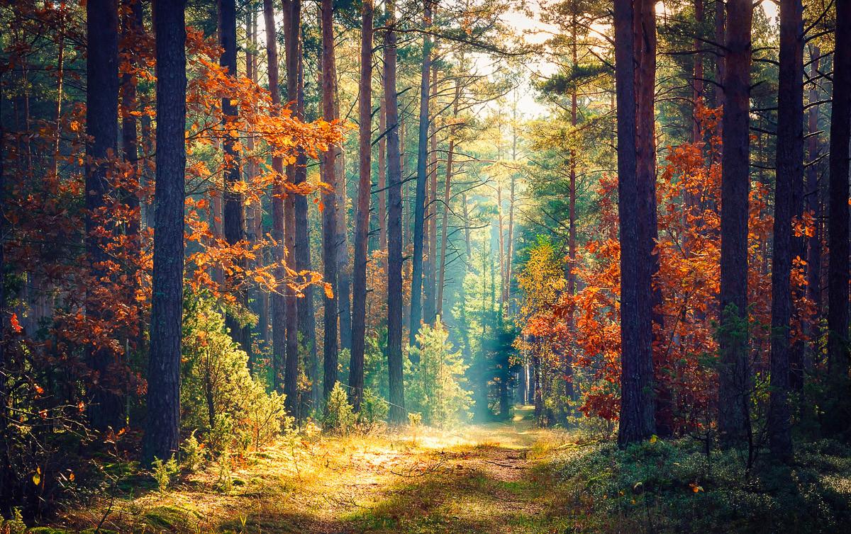 Herbstwald Sonnenstrahlen