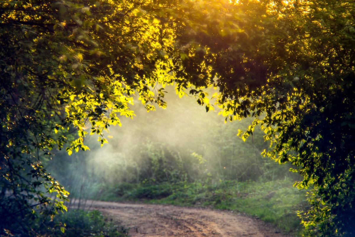 Nebelwald im Frühling