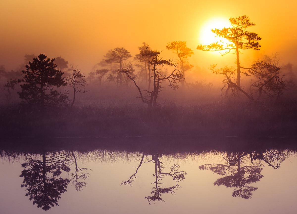 Misty Morning Scenery