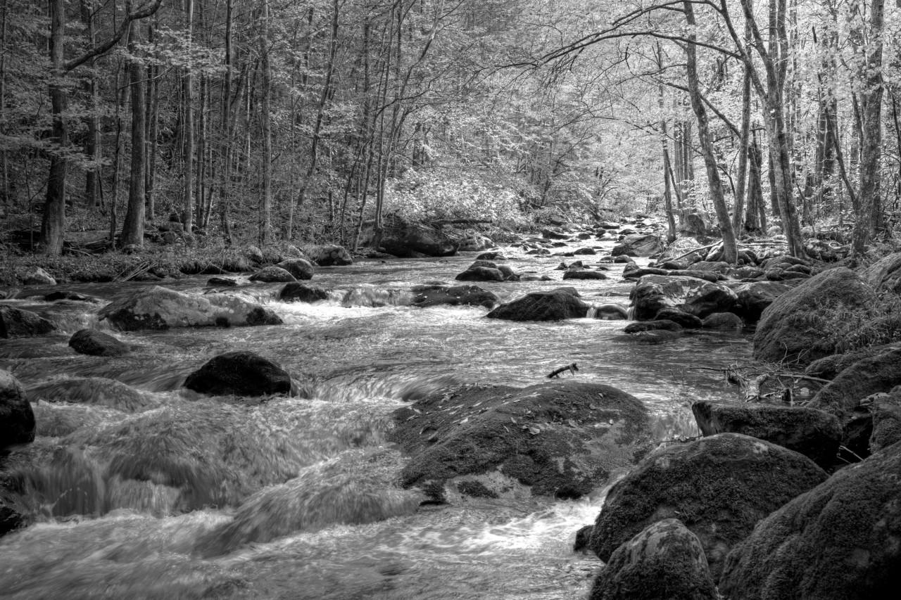 Fluss im Wald Schwarz & Weiß