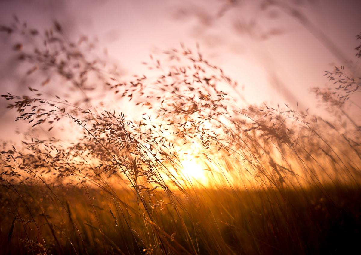 Sommer trockenes Gras