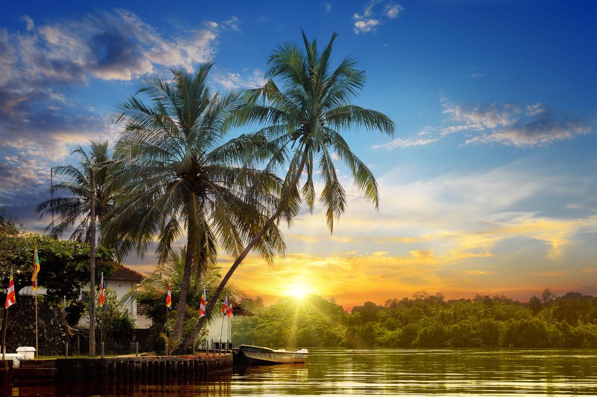 Tropischer Palmen-Sonnenaufgang