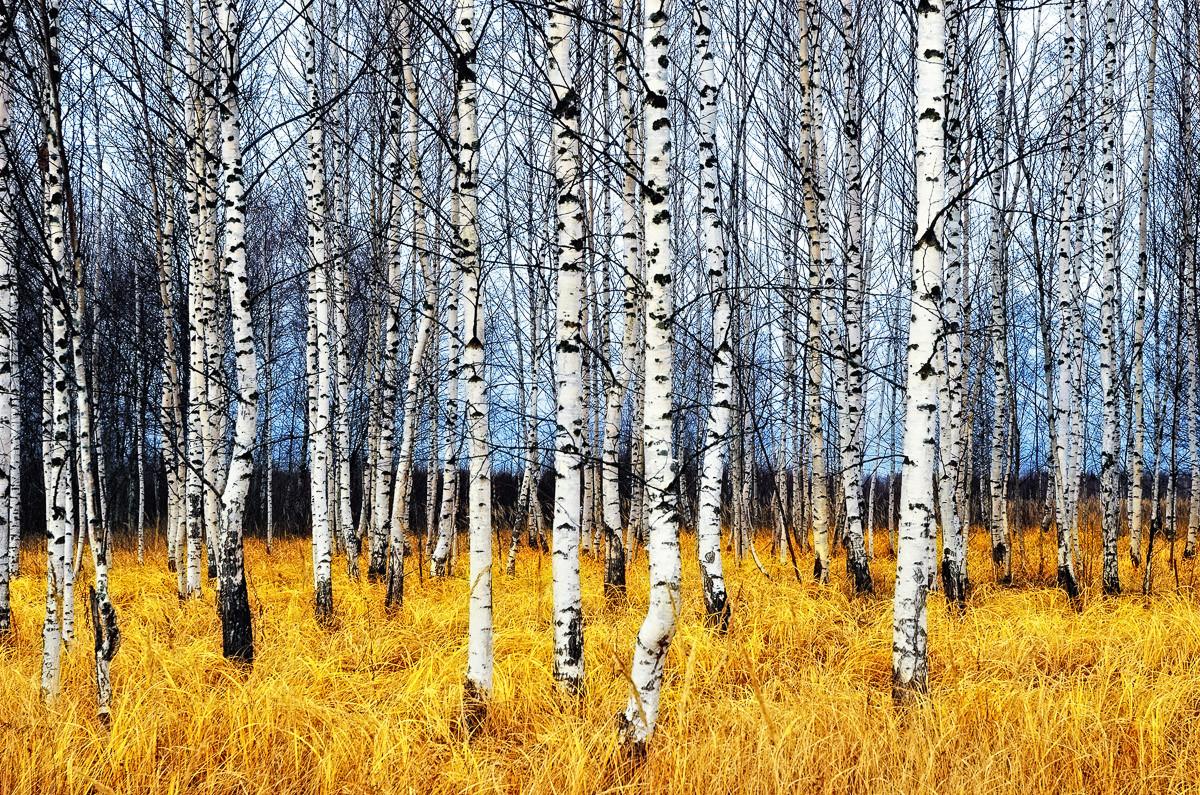 Herbst Birkenhain