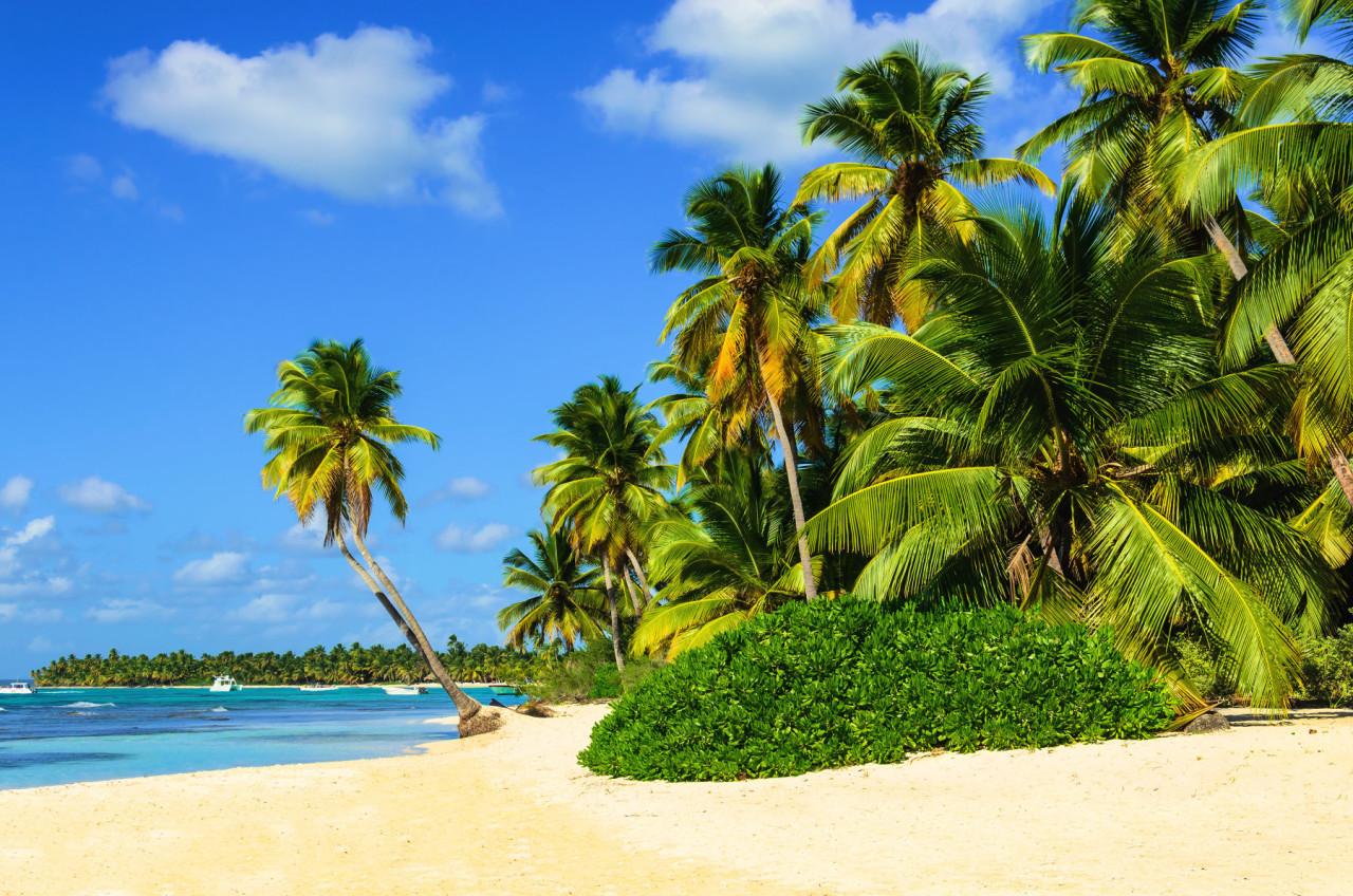 Exotischer Palm Beach