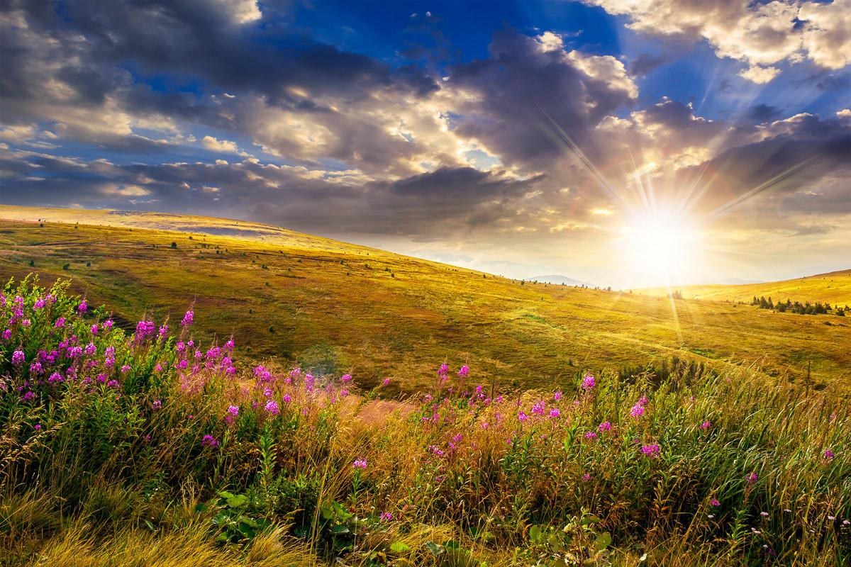 Wilder Blumen-Bergsonnenuntergang
