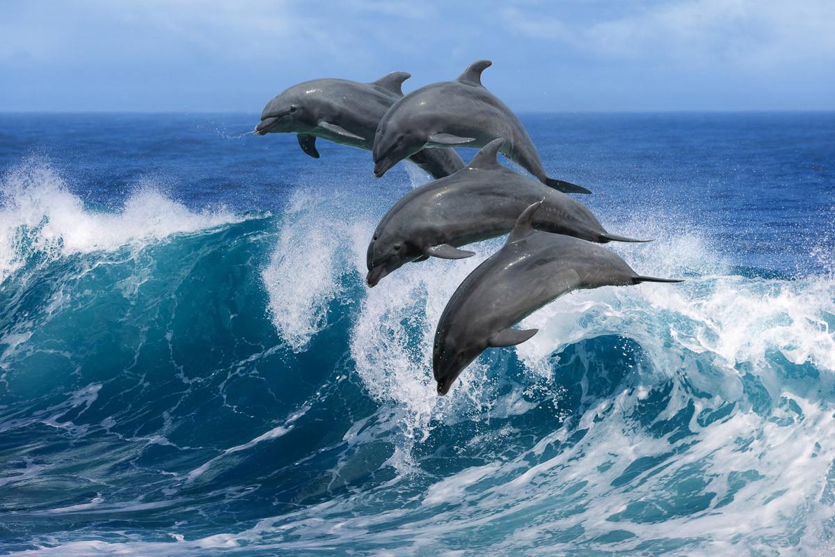 Verspielte Delfine