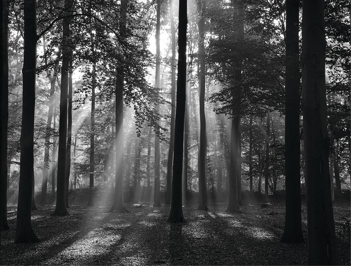 Forrest Morgen in schwarz & weiß