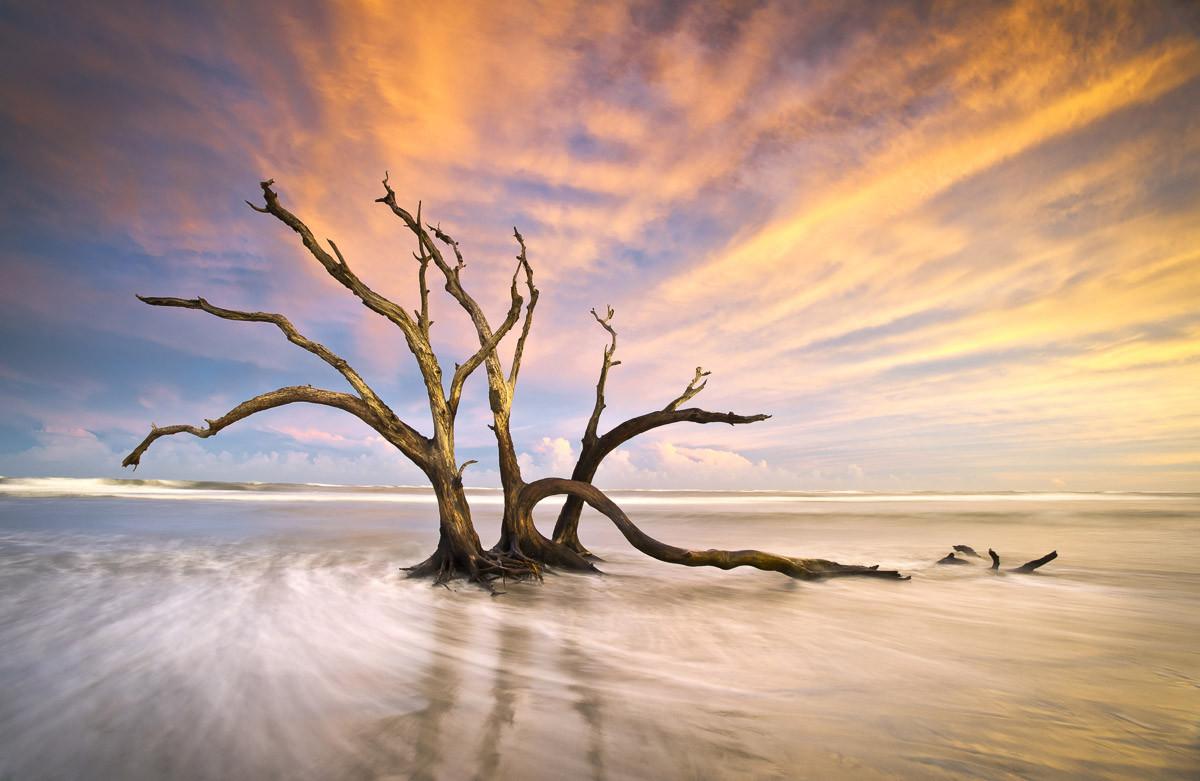 Torheit Strand toter Baum