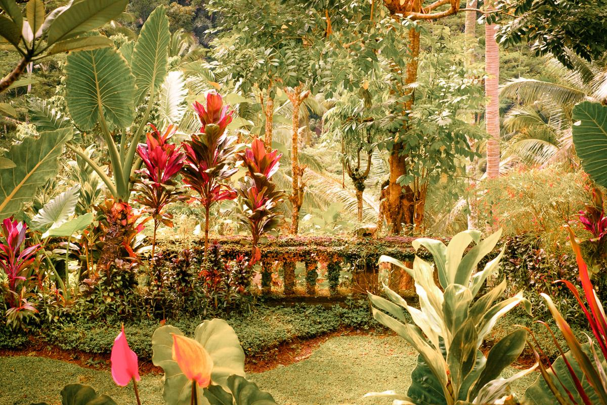 Fantasie tropischer Garten