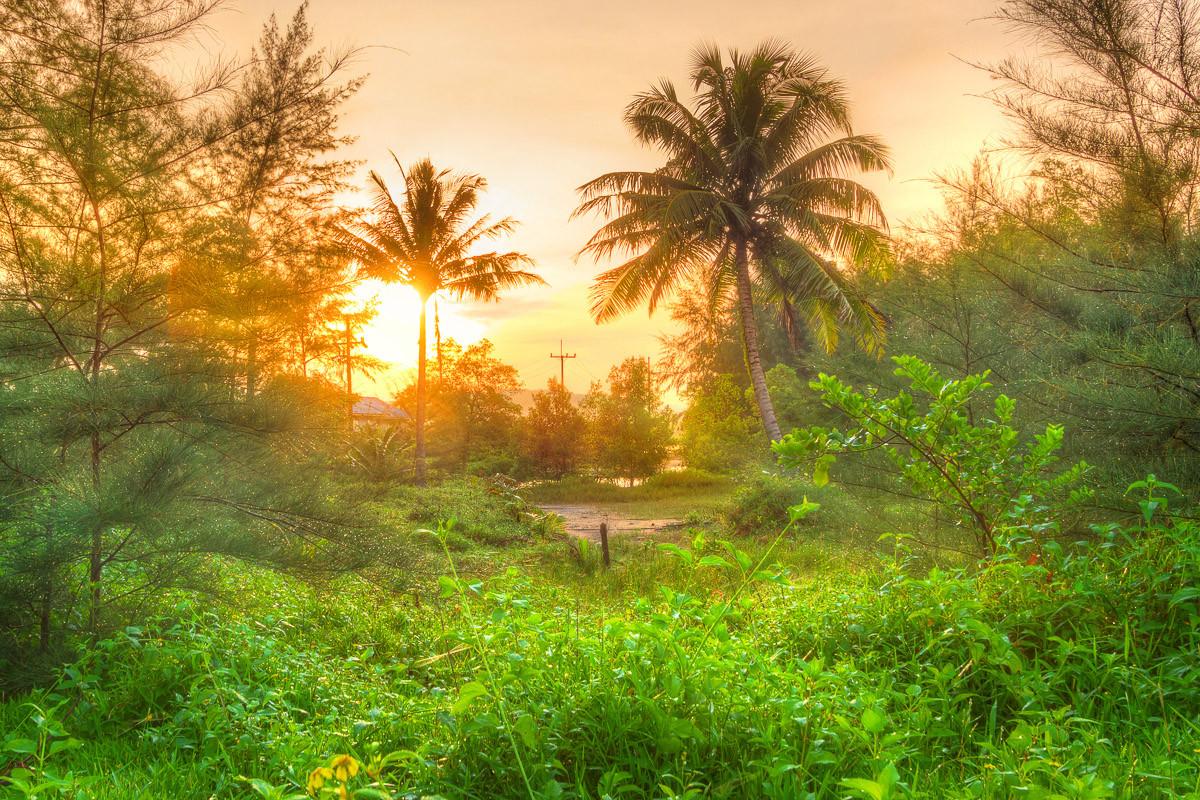 Erstaunlicher Dschungel-Sonnenaufgang
