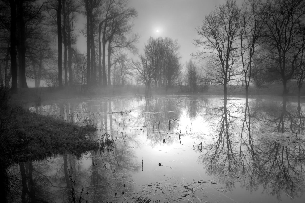 See im Wald Schwarz & Weiß