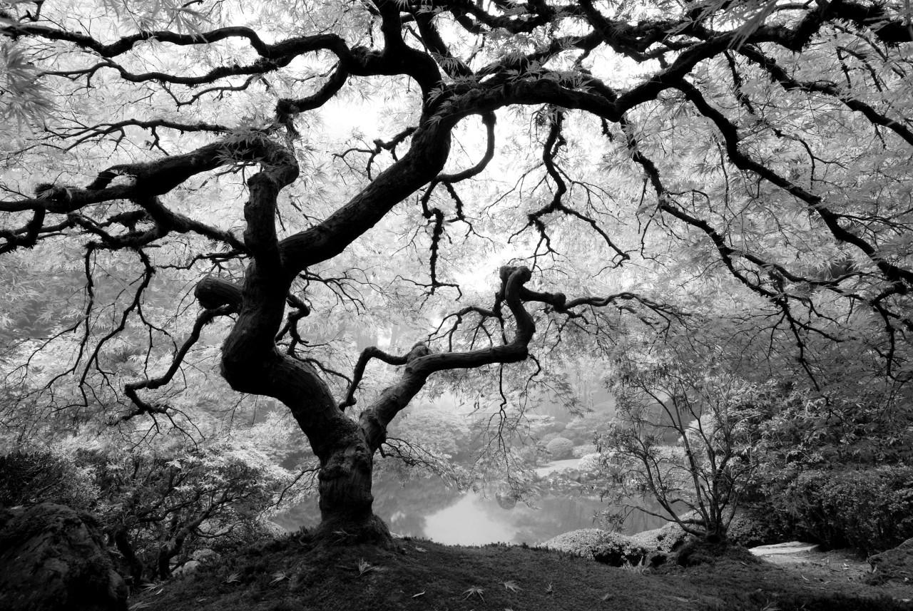 Waldbaum schwarz & weiß