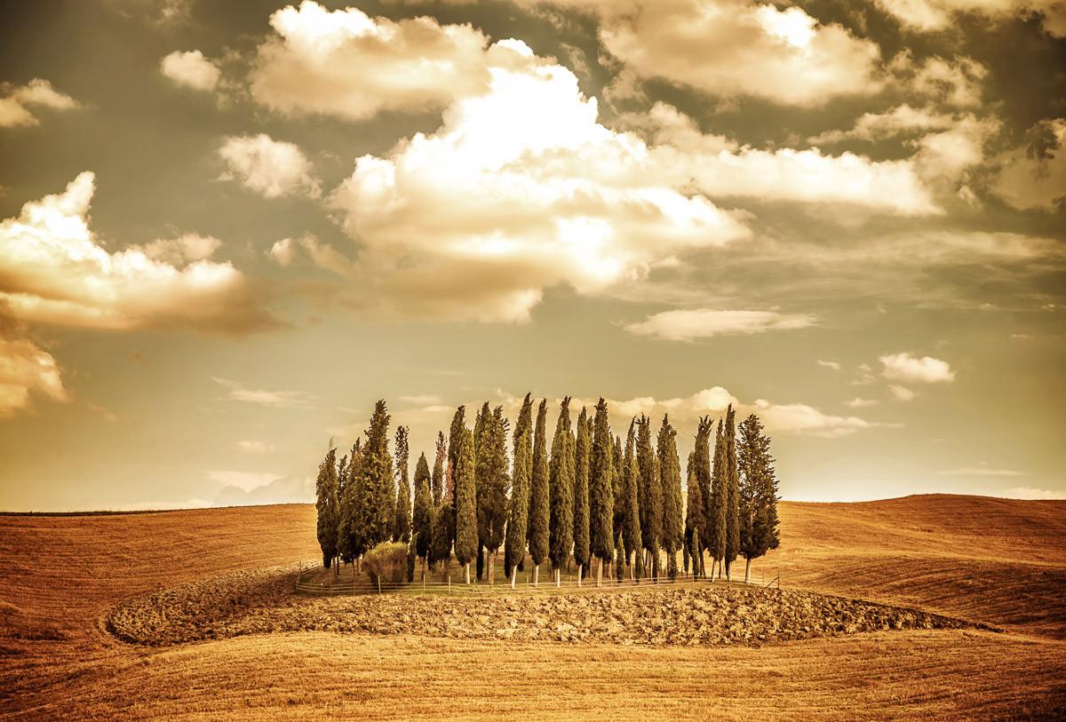 Herbst Vintage Bäume