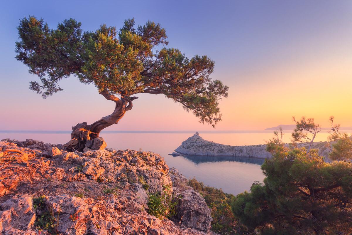 Erstaunlicher Baum auf dem Felsen