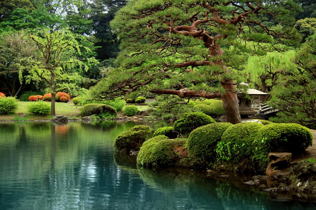 Ruhiger Zen See